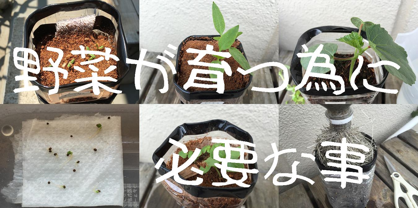 野菜が育つ条件、野菜に必要なもの、肥料、光、水、野菜が育たない、原因、