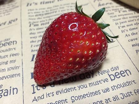 イチゴ 苺 種 発芽