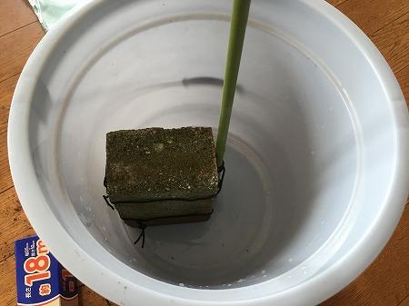 水耕栽培 道具 Hydroponic Gardening