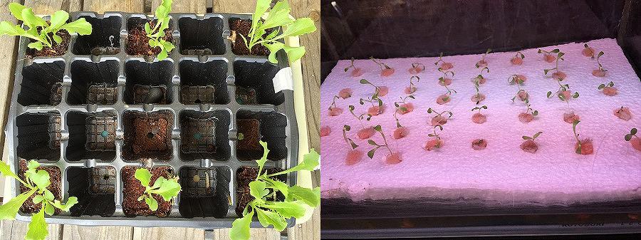 日照比較実験 家庭菜園 Sunshine comparison