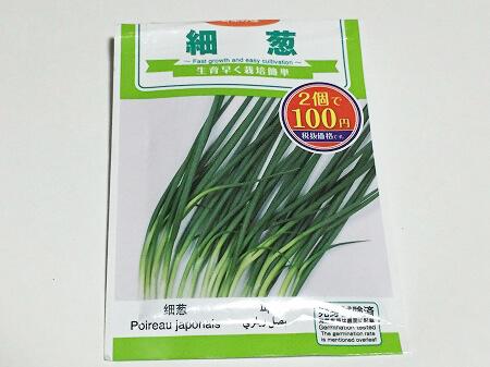 細ネギ French green onion 種まき