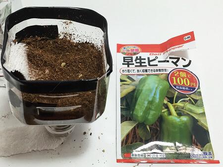 ピーマン green pepper 青椒 種まき