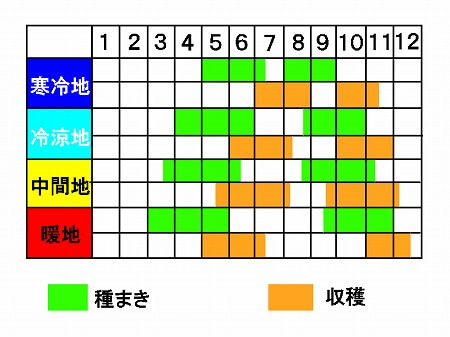 しそ Japanese basil 種まき 収穫 時期