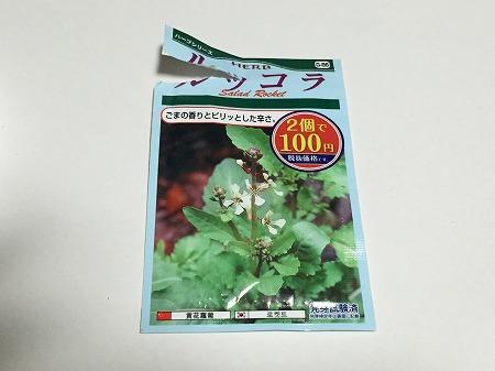 ルッコラ arugula 種まき