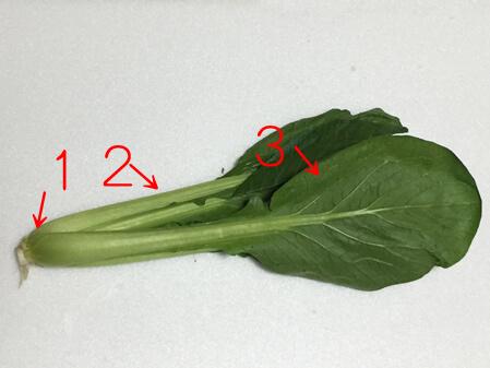 小松菜 美味しい 見分け方