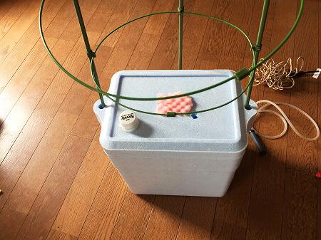 水耕栽培 自作 簡単 Hydroponic Gardening
