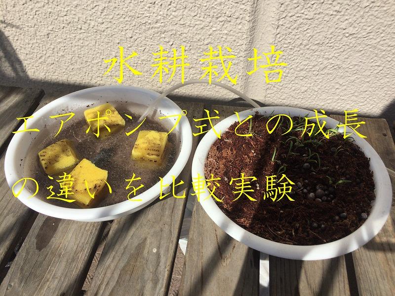 水耕栽培 エアポンプ 比較実験