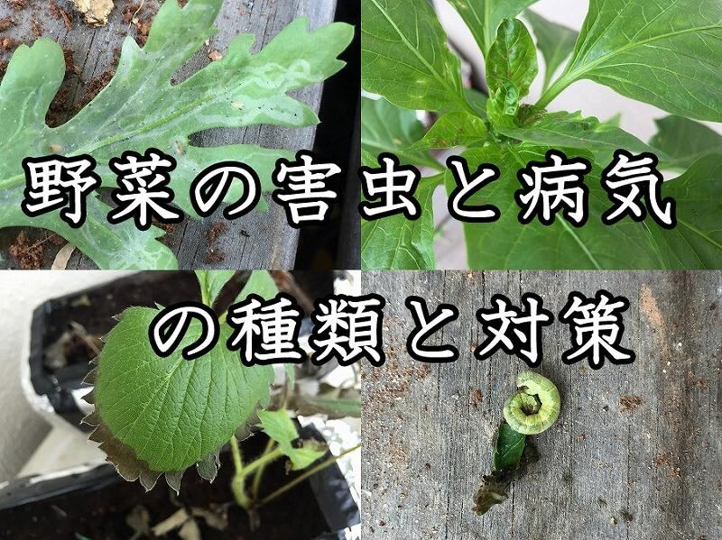野菜,害虫,病気,種類,対策