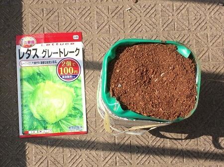 レタス 種まき lettuce
