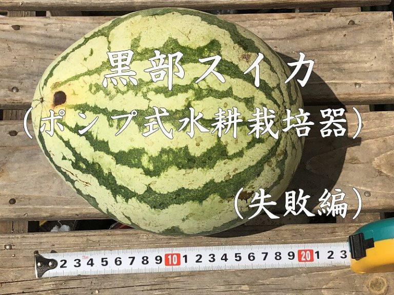 くろべスイカ、スイカ、西瓜、ジャンボスイカ、kurobe watermelon