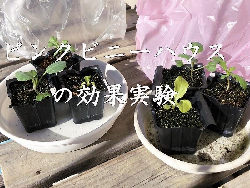 ピンクビニールハウス、野菜育つ、日照効果、野菜、光合成、