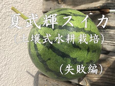 スイカ 夏武輝 水耕栽培 育て方 飼育 作り方 Japan  watermelon