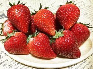イチゴ Strawberry