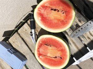 スイカ、西瓜、watermelon
