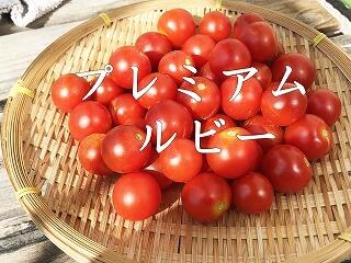 プレミアムルビー 、ミニトマト、 cherry tomatoes、
