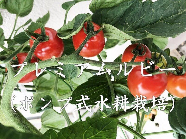 プレミアムルビー (ミニトマト) アタリヤ農園   Cherry tomato