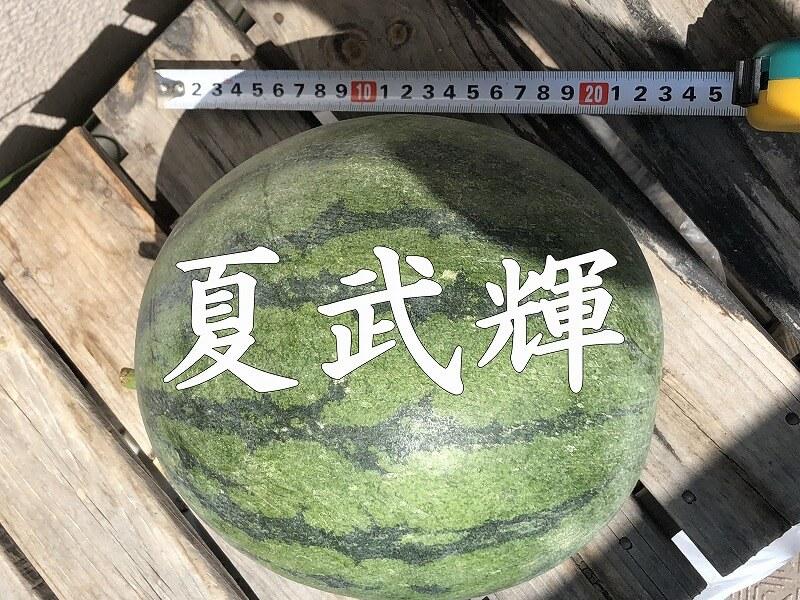 スイカ 夏武輝 栽培 作り方